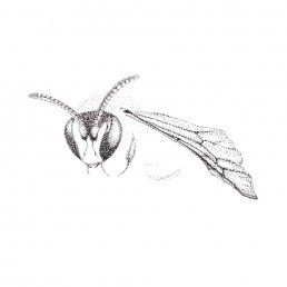 Wasp illustration by Rayna Lo