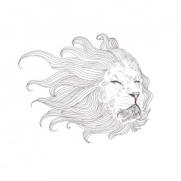 Lion illustration by Rayna Lo